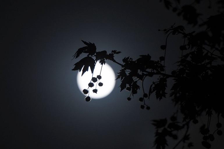 من علامات ليلة القدر أنها ليلة قوية الإضاءة ولا يُرمى فيها بنجم
